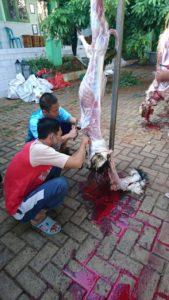 Proses pelulangan kambing (Foto: Admin/2020)